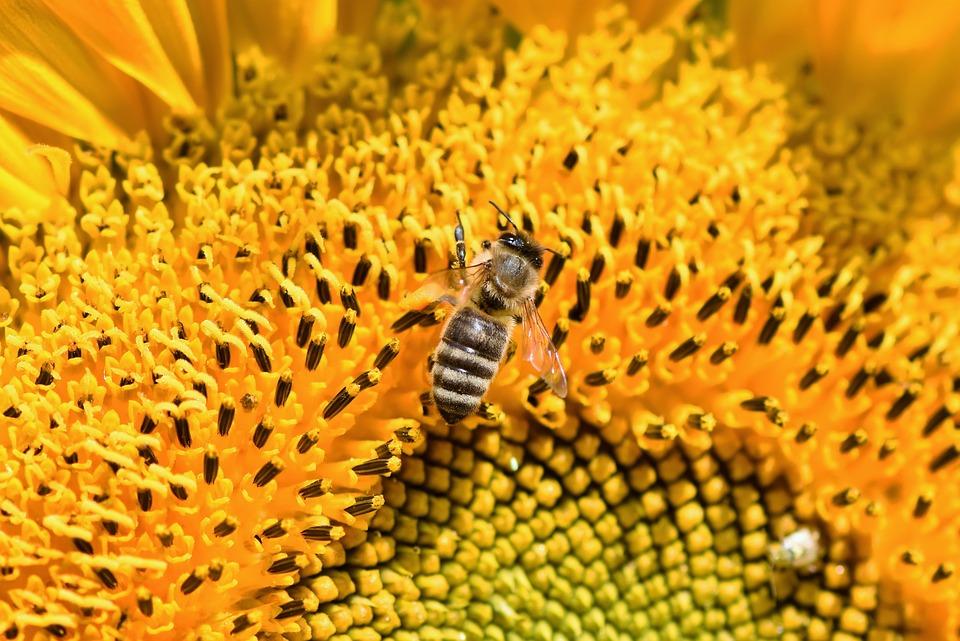 Csatári István méhész